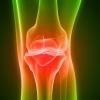 Анатомія коліна: кістки, м`язи, зв`язки колінного суглоба