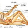 Артроз стопи: симптоми і лікування