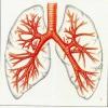 Чим краще лікувати бронхіт