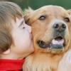 Діти і домашні тварини: дотримуємося правил безпеки