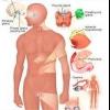 Надлишкова пітливість - винні гормони?