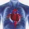 Як лікувати аритмію серця народними засобами