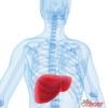 Як лікувати печінку народними засобами