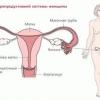 Як вилікувати рак шийки матки