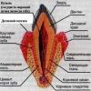 Карієс, пародонтоз, періодонтит