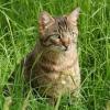 Кішки, коти і кошенята, а також все, що з ними пов`язано