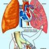Лікування хронічного бронхіту