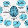 Лікування та наслідки інсульту лівого і правого боку