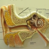Лікуємо отит вуха