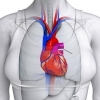 Легенева артерія