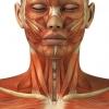 М`язи шиї