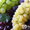 При яких хворобах корисний виноград?