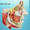 Трійчастий нерв: симптоми ураження трійчастого нерва
